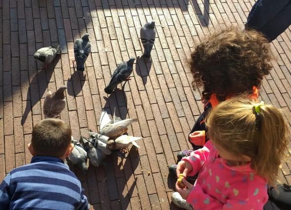 dando de comer a las palomas